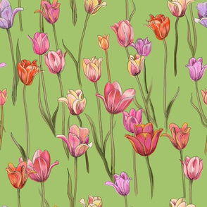 tulips - reds and pinks on green