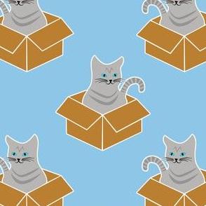 Grey Tabby in a Box on Blue