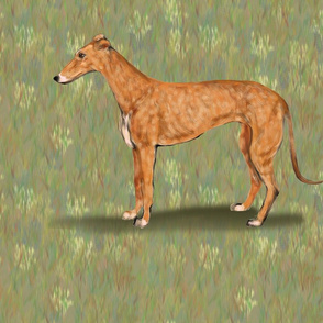 Red Fawn Greyhound for Pillow
