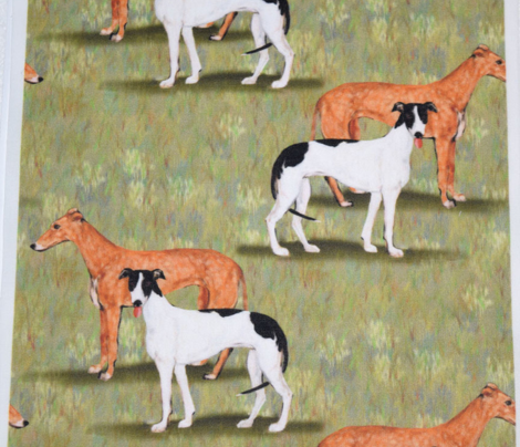 Red Fawn and Black and White Greyhounds