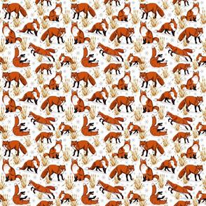 red_fox_snow_day_6x6