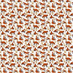 red_fox_snow_day_4x4