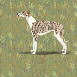 Brindle and White Whippet for Pillow
