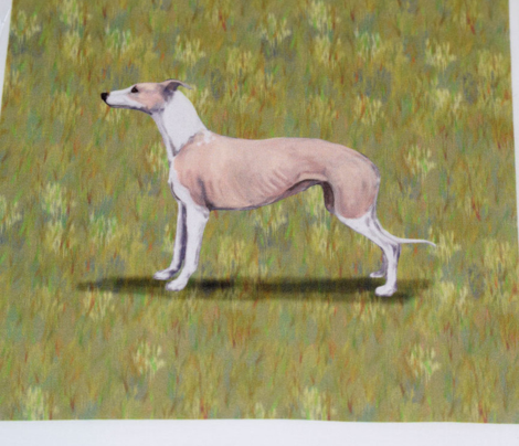 Fawn and White Whippet for Pillow