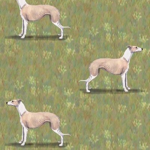 Fawn and White Whippet
