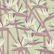 Strelitzia purple