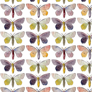 Watercolour Moth Collection