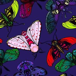 Moths 1