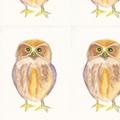 baby watercolour owl