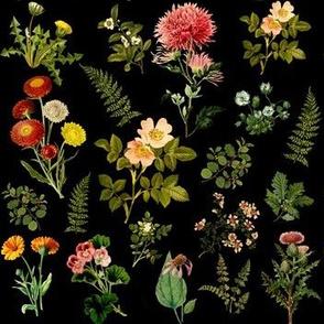 Lil Botanicals in Black