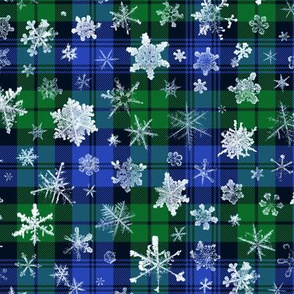 snowflakes on the Campbell tartan