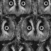 Owl Black and White