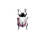 Rrpurple_bug_thumb