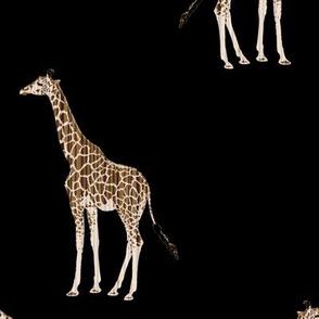Zebrawood Giraffe Allover