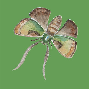 Jenoiserie_Small_green_and_brown_moth