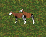 Rteak_okapi_for_pillow_thumb