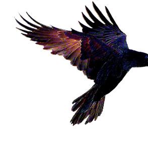flying_raven_pastels