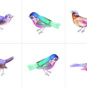 Songbirds, Set B 16 inch CUSHIONS