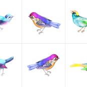 Songbirds, Set D 16 inch CUSHIONS