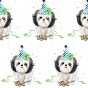 Shih tzu birthday boy M