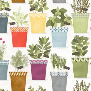 plante_aromatique_L