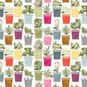 plante_aromatique_M