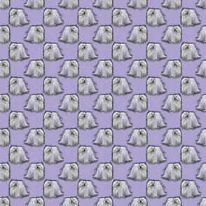 Posing Maltese - small purple