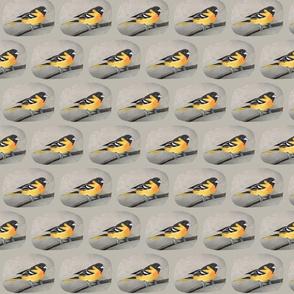 Rrrrrgoldfinch_4_shop_thumb
