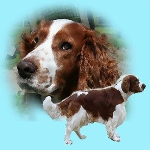 Welsh_Springer_Spaniel