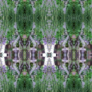 Rrthumb_copy_of_flower_pictures_lavender_wagon_wheel_1024_shop_thumb