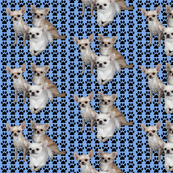 chihuahuas_on_blue