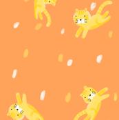 New Cats