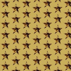 SAFARI STARS