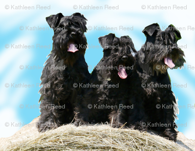 Rschnauzers_preview
