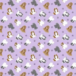 Tiny Shih Tzus - purple