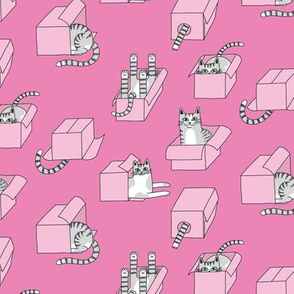 cats in boxes in pink