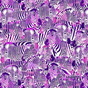 Zebra Stripes in Red Violet