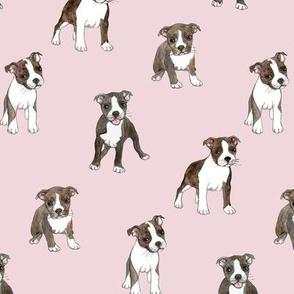 Lots of Little Boston Terrier Puppies on Dusty Pink