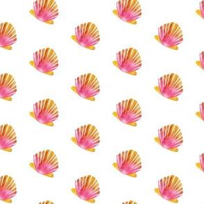 Sunrise Shells