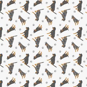 Tiny Beaucerons - gray