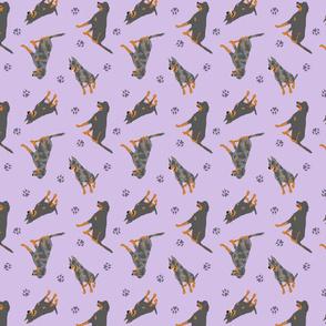 Tiny Beaucerons - purple