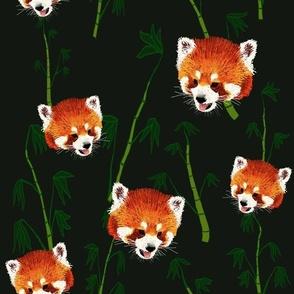 Sketched_Red_Pandas