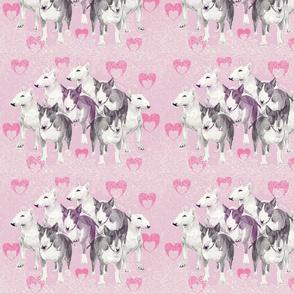 Pastel Bulll Terriers