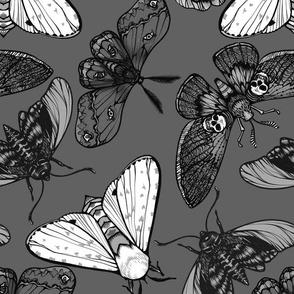 Grey Moths