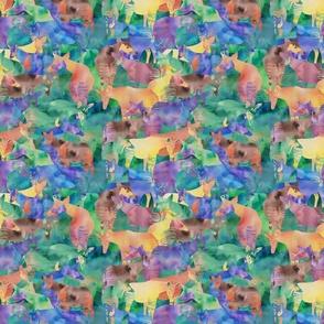Oh my Okapi!