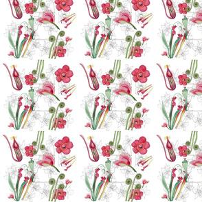 borneo_flora