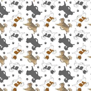 Trotting long coat Chihuahuas and paw prints C - white