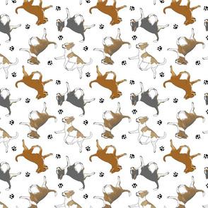 Trotting smooth coat Chihuahuas and paw prints B - white