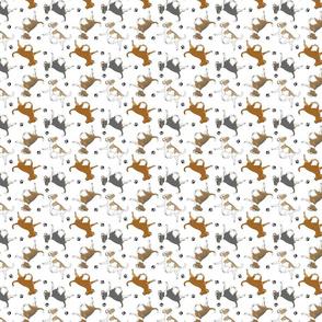 Trotting smooth coat Chihuahuas and paw prints B - tiny white