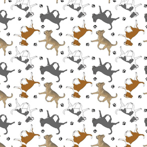 Trotting smooth coat Chihuahuas and paw prints C - white